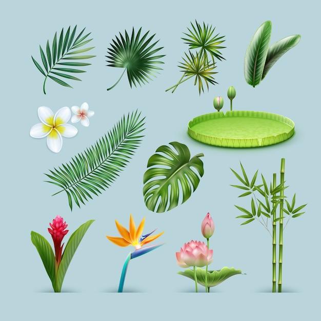熱帯植物のベクトルセット:ヤシの葉、モンステラ、巨大なアマゾン睡蓮パッド、竹の茎、楽園の鳥、レッドジンジャーの花と背景に分離されたプルメリア 無料ベクター