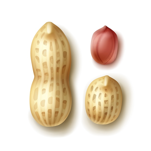 Векторный набор всего арахиса с оболочкой заделывают вид сверху, изолированные на белом фоне Бесплатные векторы