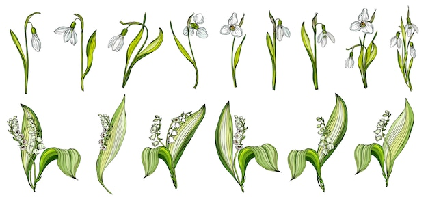 Vector set of snowdrop and lily of the valley colors Premium Vector