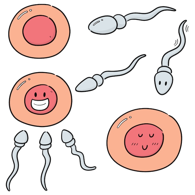 Vector set of sperm and egg Premium Vector