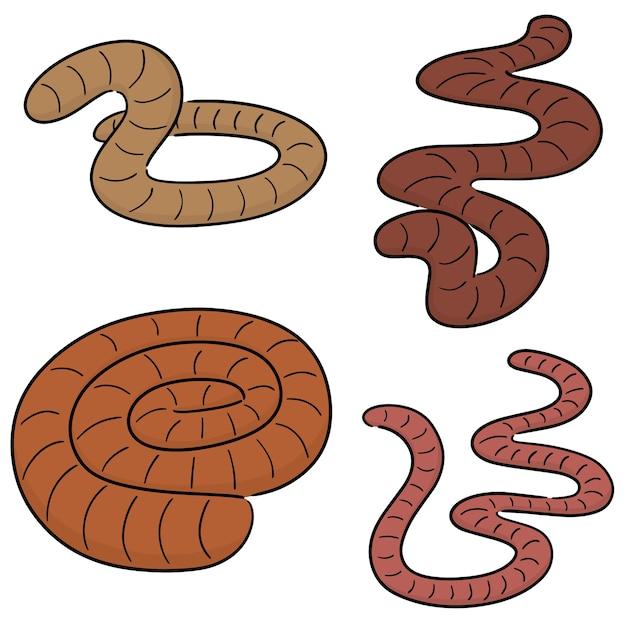 Vector set of worms Premium Vector