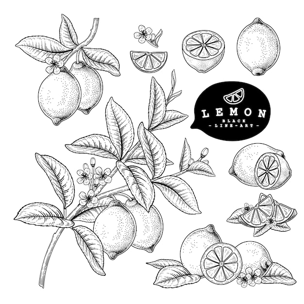 Vector sketch citrus fruit decorative set. lemon. hand drawn botanical illustrations. black and white with line art isolated on white backgrounds. fruits drawings. retro style elements. Premium Vector