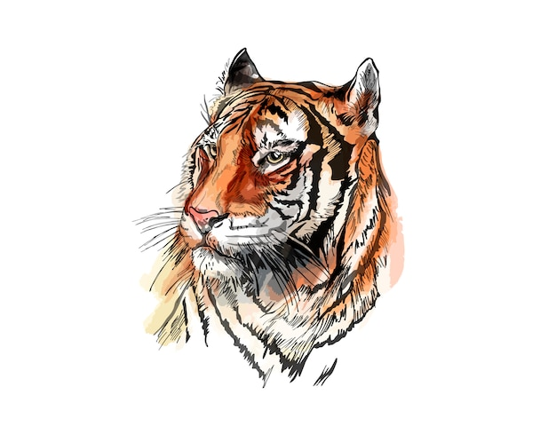 Vector sketch of a tiger. Premium Vector