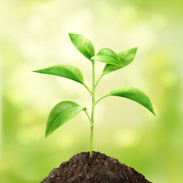 Вектор небольшой зеленый росток в почве с фоном боке Бесплатные векторы