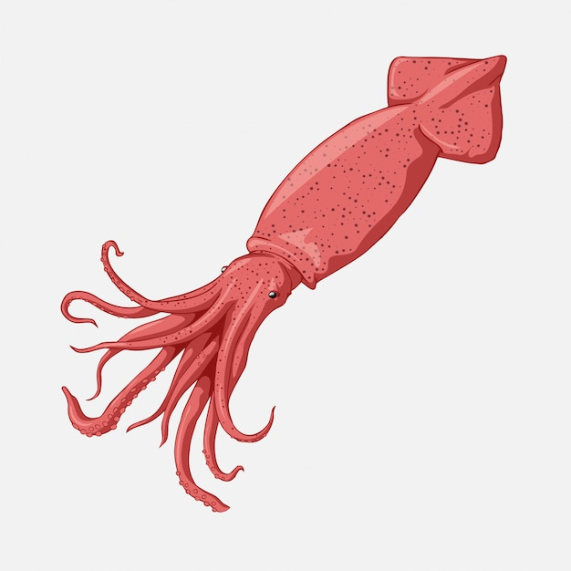 Vector squid cartoon marine illustration. Premium Vector