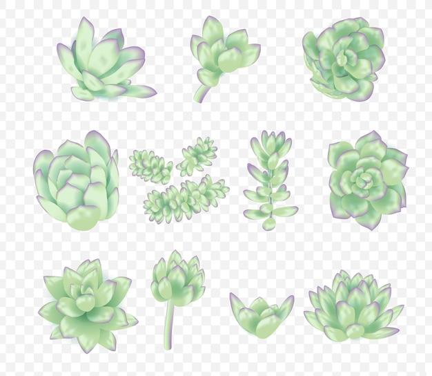 Vector succulents collection Premium Vector
