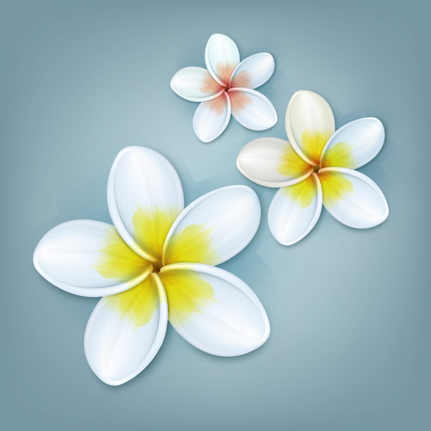 Vector tropical plant plumeria or frangipani flowers isolated on blue background Free Vector