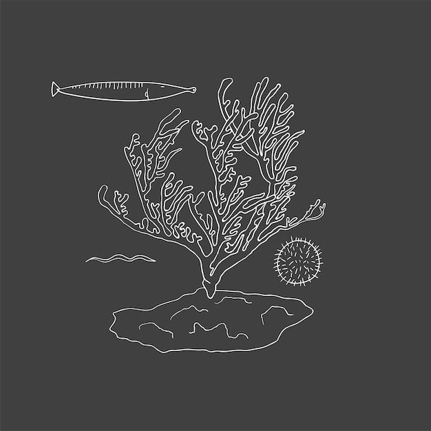 Vector of underwater creatures Free Vector