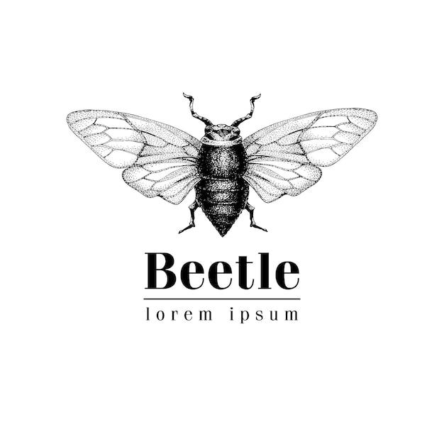 Vector vintage hand drawn vector logo template with beetle, bug, dor, dorr, insect. retro illustration Premium Vector