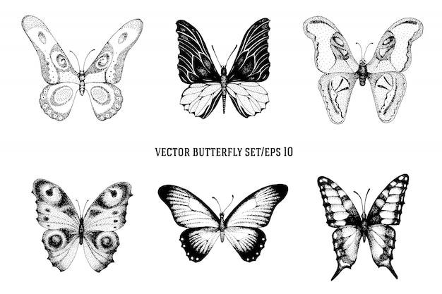 Vector vintage hand drawn vector set of beautiful butterflies on a white background. retro illustration Premium Vector
