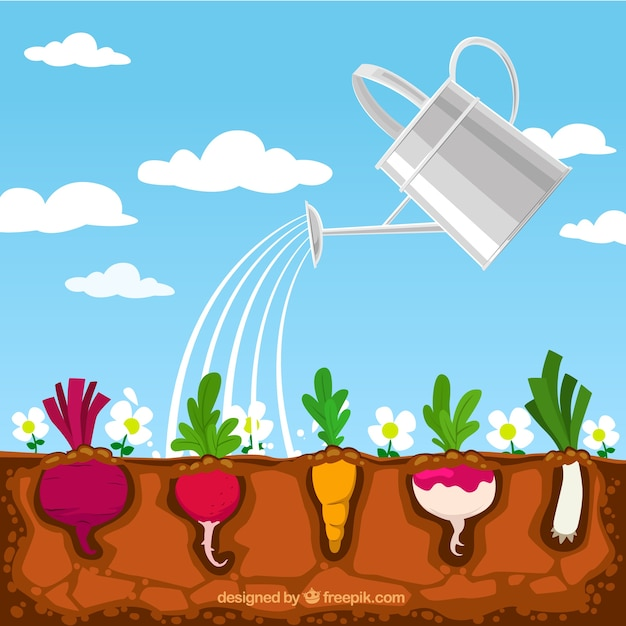 Vegetable Garden Vectors Photos and PSD files Free Download