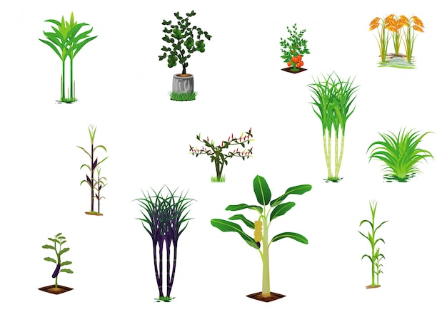 Vegetable plant vector design Premium Vector