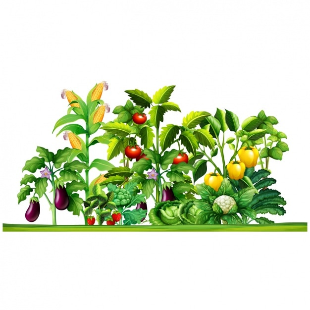 Vegetable plants design vector premium download - Flowers not to plant with vegetables ...