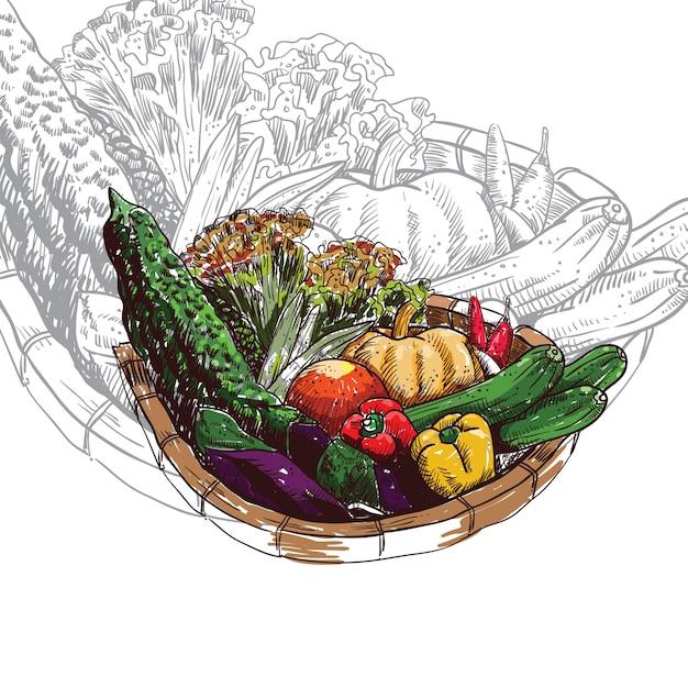 Vegetables Basket Vector Vector Premium Download
