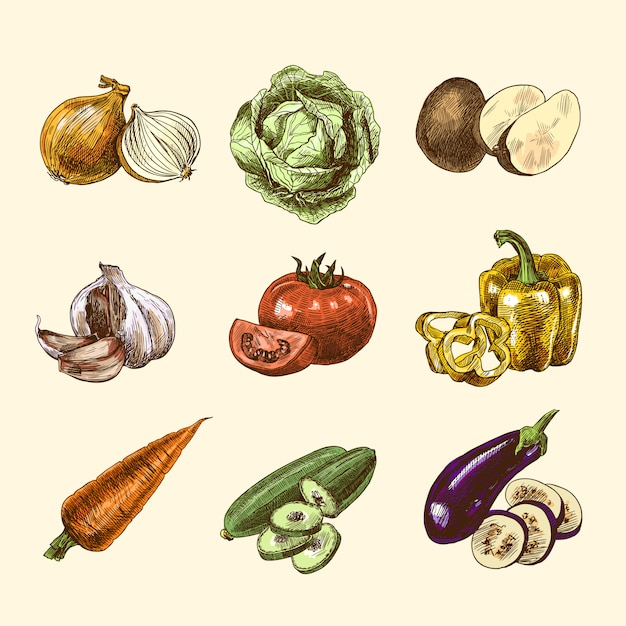 Vegetables sketch set color Free Vector