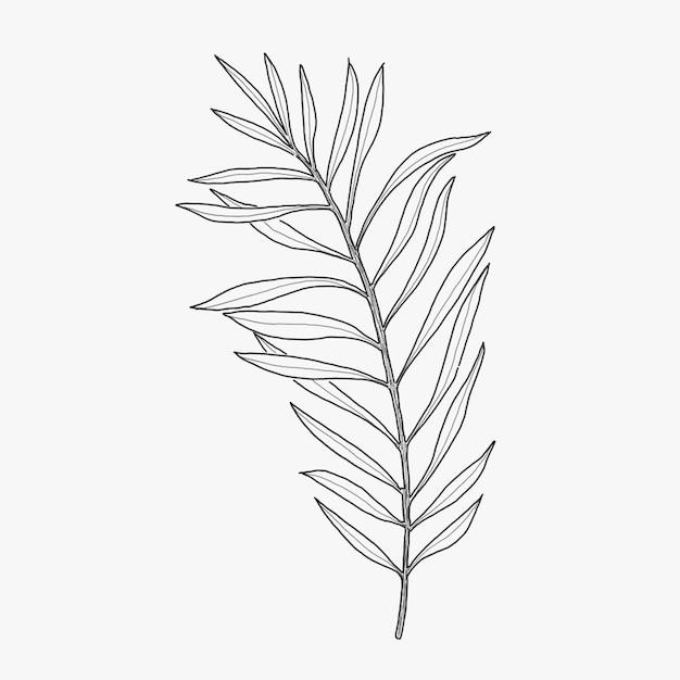Grass Outline Vector Vertical Leaf Grass Ou...
