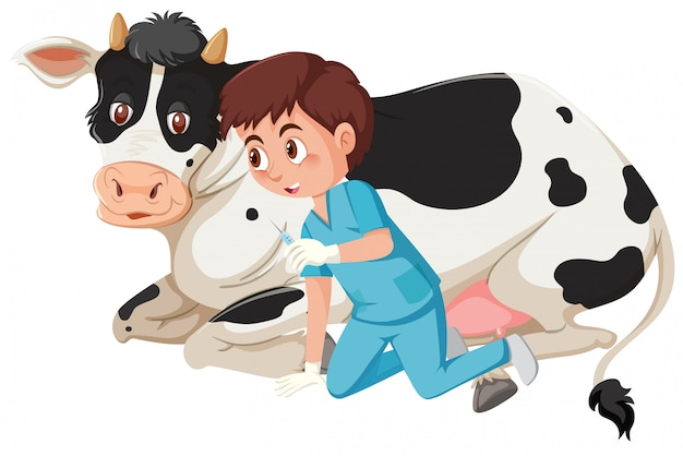 A vet giving injection to a cow Premium Vector