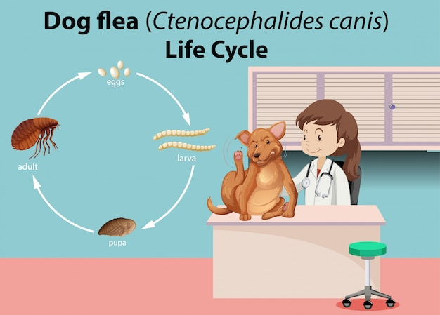 Veterinarian with sick animal Free Vector