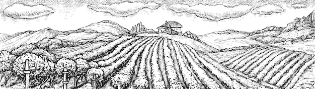 Виноградник пейзаж. ручной обращается деревенский виноградник бесшовные сельский пейзаж эскиз каракули иллюстрации. поле плантации виноградного куста лозы на холме и винодельне, построенной на фоне. виноградарство Premium векторы