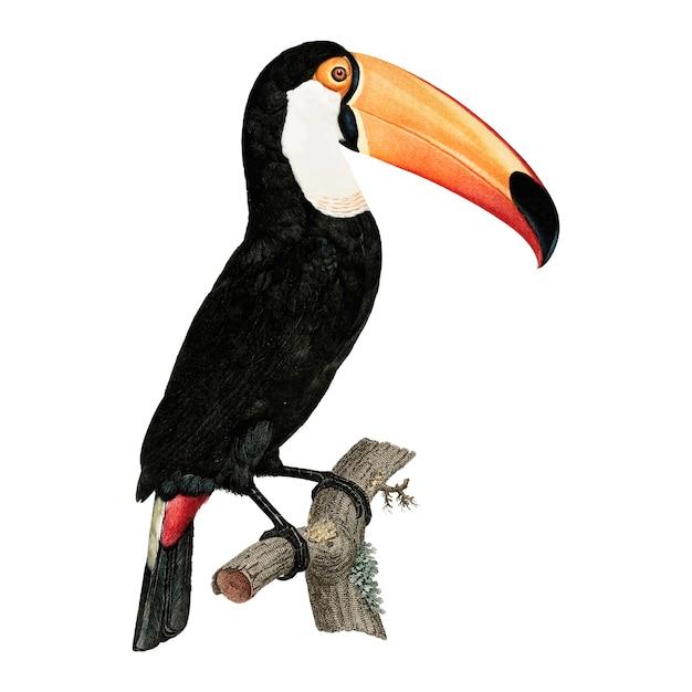 Vintage bird illustration Free Vector