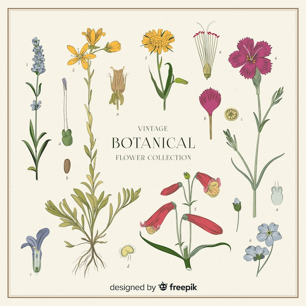 Vintage botanical flower collection Free Vector