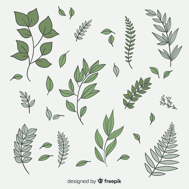 Vintage botanical leaf collection Vector | Free Download
