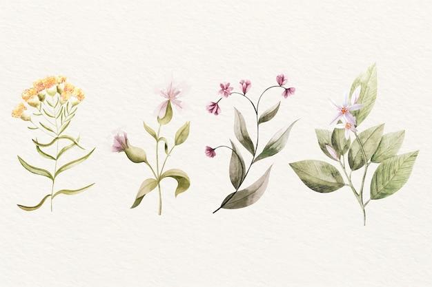 빈티지 식물학 꽃 구색 무료 벡터