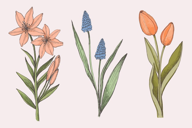 Vintage botany flower collection draw Free Vector