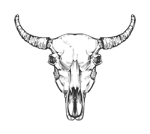 Vintage buffalo skull sketch. bull animal head bones in hand drawn style. cow head with horn Premium Vector