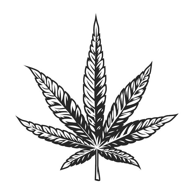Рисунок конопля листья запах конопли при курении