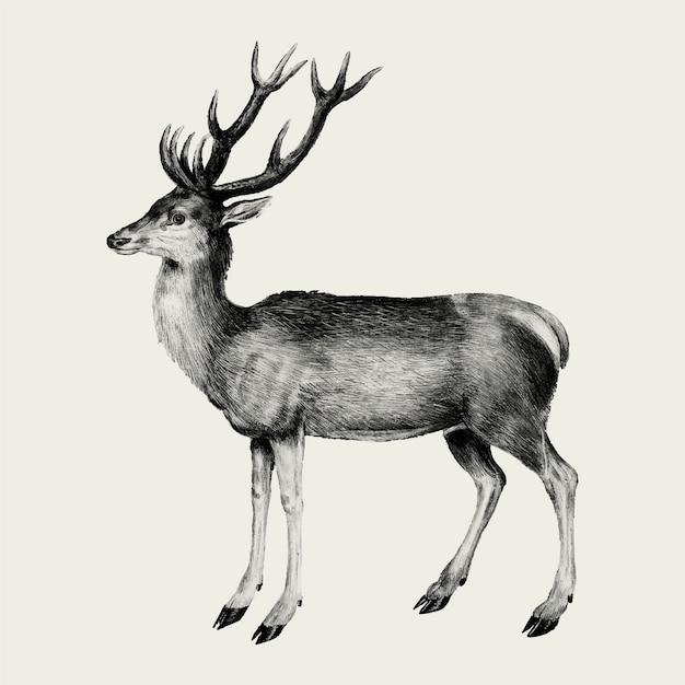 Винтажная иллюстрация оленя в векторе Бесплатные векторы