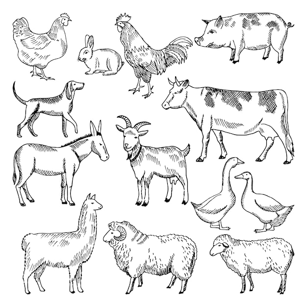 Vintage farm animals. farming illustration in hand drawn style. animal farming sketch drawing chicke Premium Vector