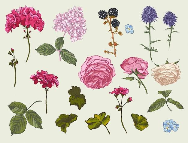 Vintage floral set of natural elements. Premium Vector