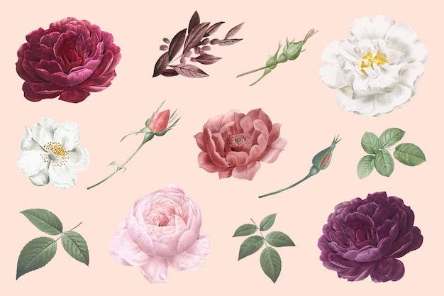 Vintage flower drawings Free Vector