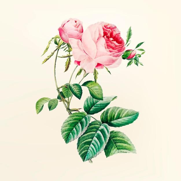 Vintage flower illustration Free Vector