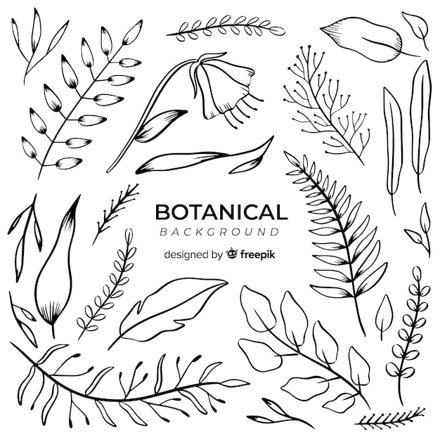 Vintage hand drawn botanical background Free Vector