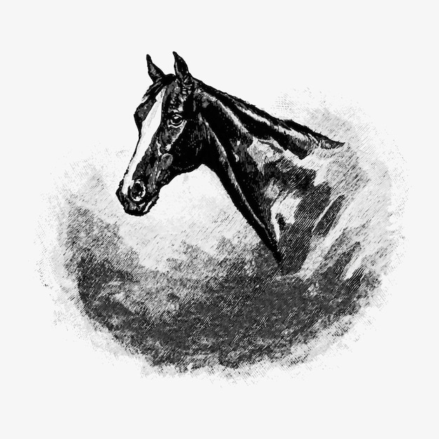 Vintage horse head illustration Free Vector