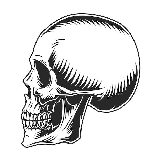 ビンテージの人間の頭蓋骨のプロファイルテンプレート 無料ベクター