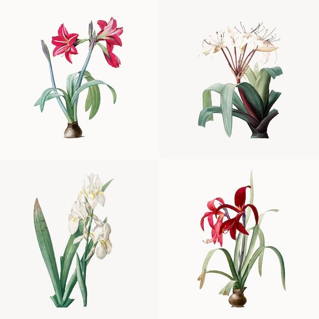Vintage illustration of set of lily Free Vector