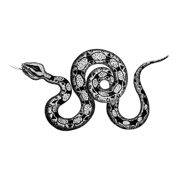 Vintage illustrations of constrictor boa Free Vector