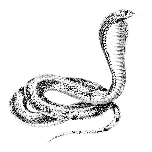 Illustrazioni d'epoca della cobra egizia Vettore gratuito
