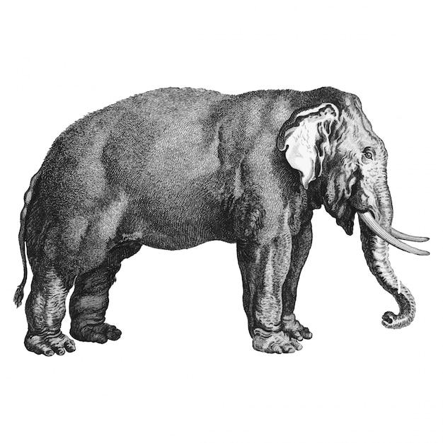 Illustrazioni d'epoca di elefante Vettore gratuito