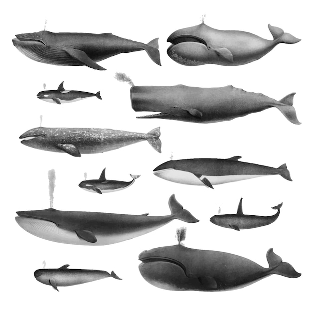 Винтажные иллюстрации китов Бесплатные векторы