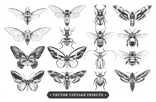 Коллекция старинных насекомых Premium векторы