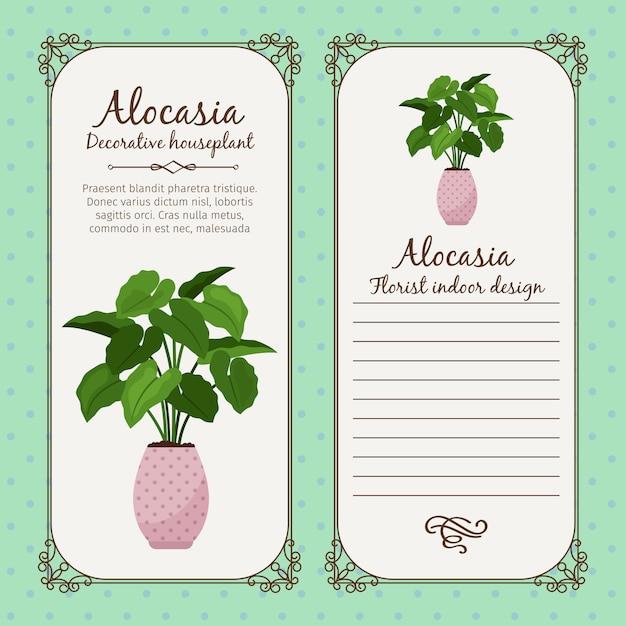 Vintage label with alocasia plant Premium Vector