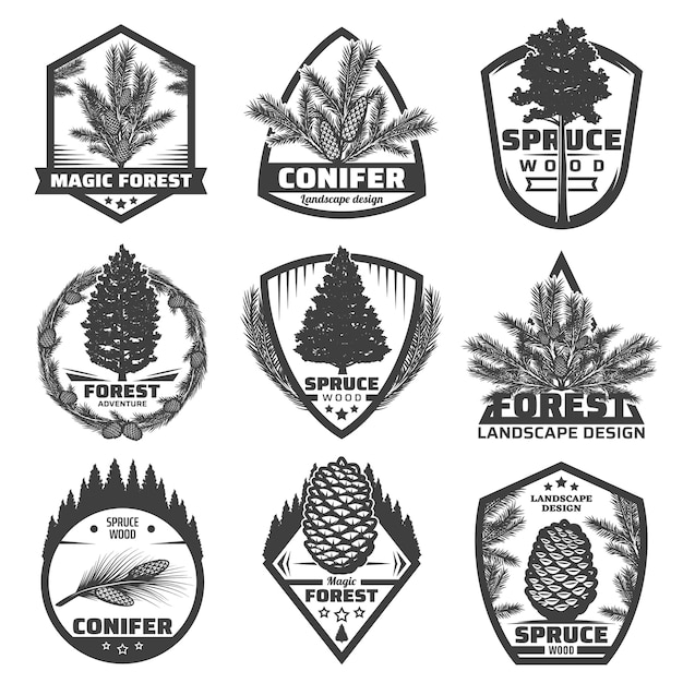 Vintage monochrome conifers labels set with fir spruce pine trees branches and cones isolated Free Vector