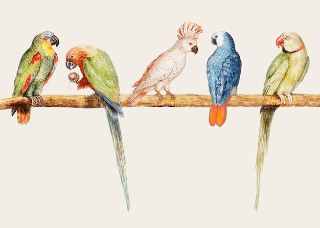 Vintage parrot variety perched on the branch illustration vector Free Vector