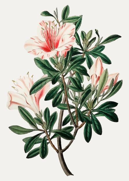 Vintage pink flower for decoration Free Vector