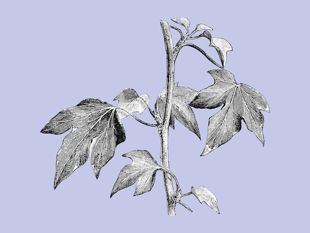 Иллюстрация старинных растений и листьев Бесплатные векторы