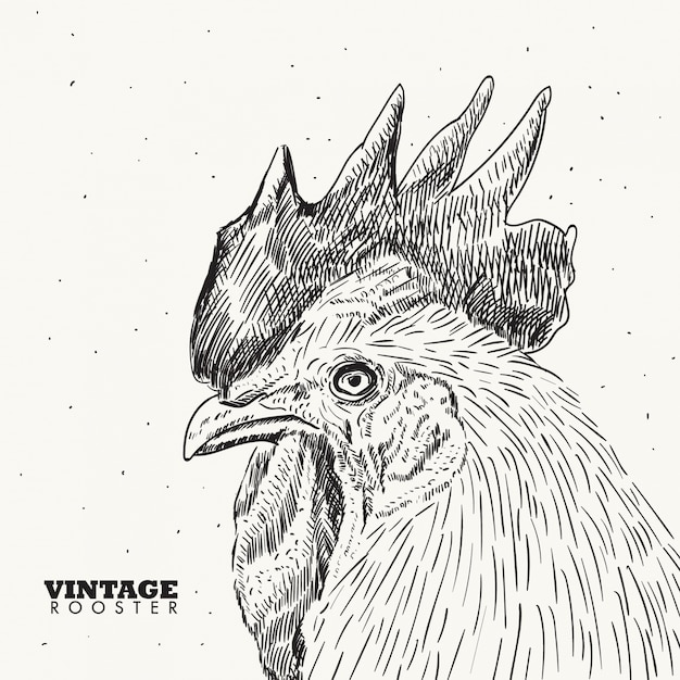 Vintage rooster illustration Vector | Premium Download
